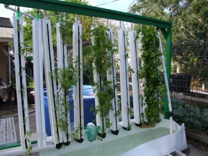 how to build a aquaponic sump